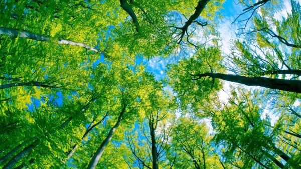 Forest-trees-green-paradise_1366x768